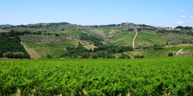 rozlehlé vinice Toskánska
