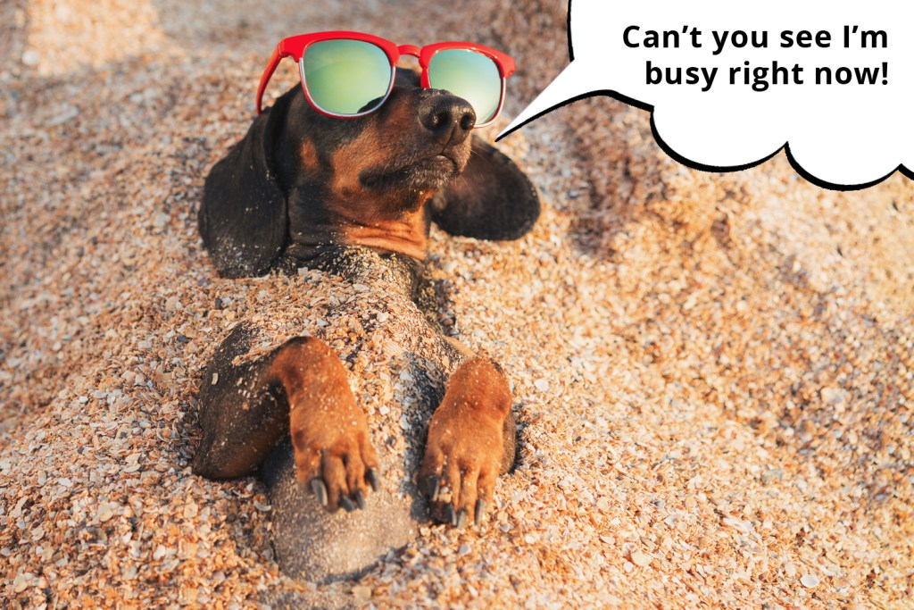 101 things dachshunds want you to know. Comical dachshund laying in the sand sunbathing with sunglasses on