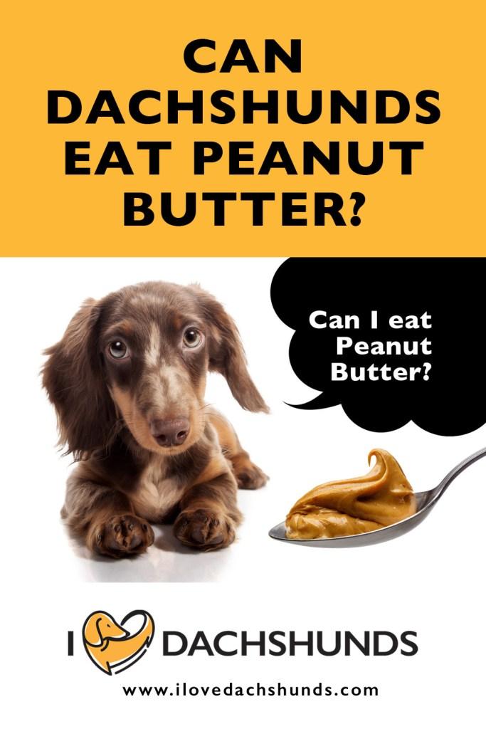 Can Dachshunds Eat Peanut Butter?