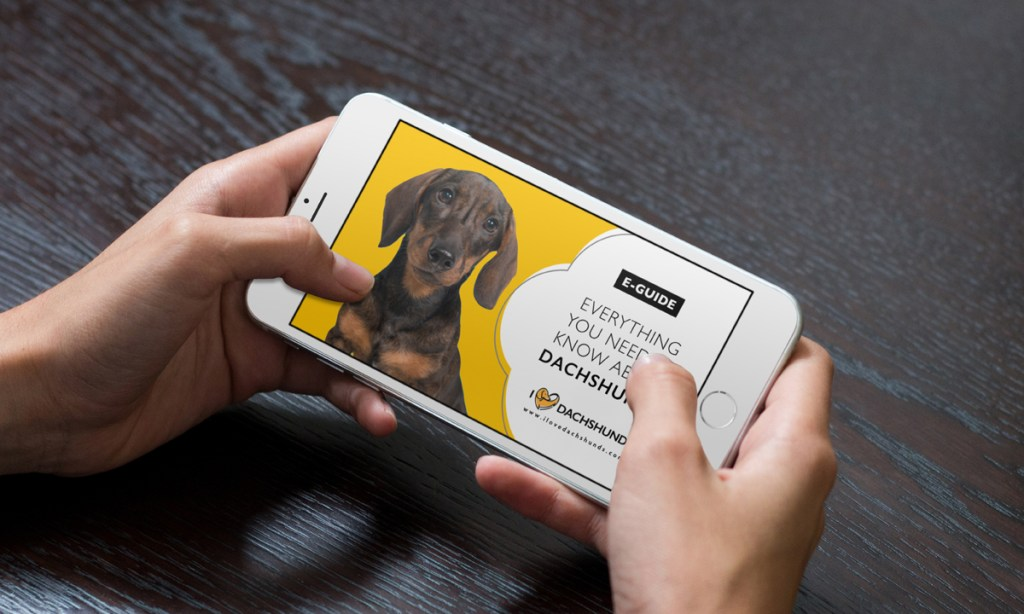 Everything you need to know about dachshunds guide testimonial