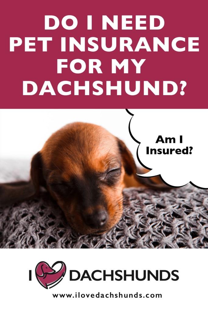 Do I need pet insurance for my Dachshund?
