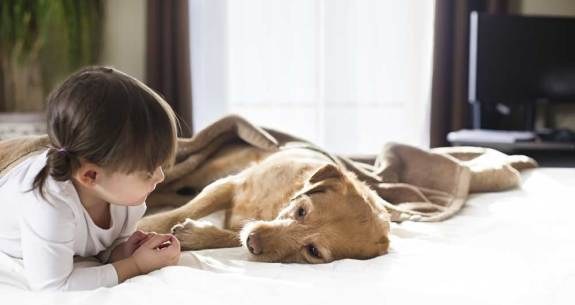 Sick-Dog-with-Girl-464205779