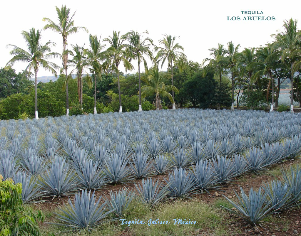 Product Review Introducing Fortaleza Tequila I Love Foodies