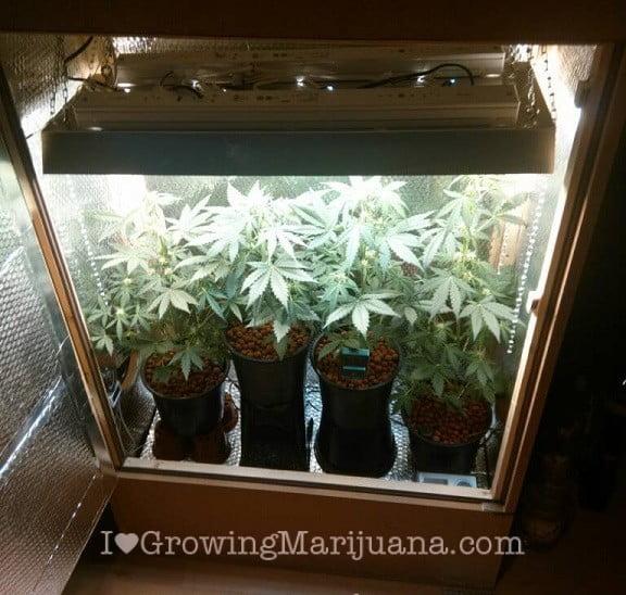 Easy Plants Indoor Maintenance