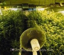 Essential requirements indoor weed