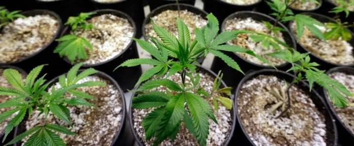 Where should I grow marijuana?