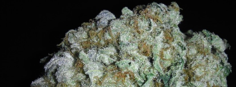 The Incredible Hulk Of A Strain Indeed