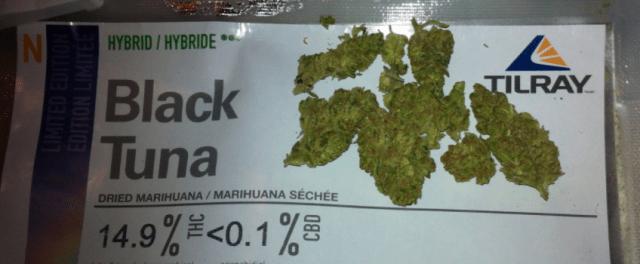 Black_Tuna_Medical