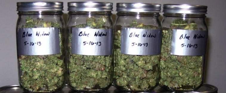 Curing Marijuana in Jars