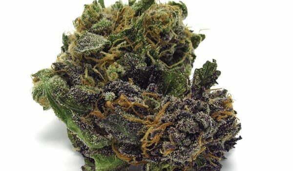 Grape Apen Strain Effects