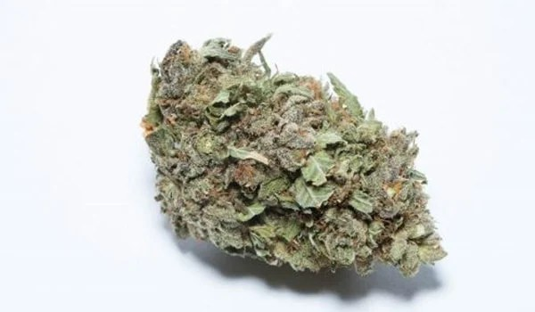 Larry Bird Kush Strain Effects Buy anesthesia kush online