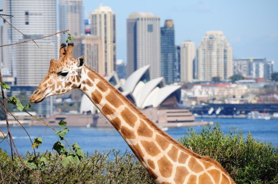 Sydney promises a remarkable wildlife experience that kids and adults will surely enjoy.