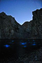 Bioluminescence - Multiple circles