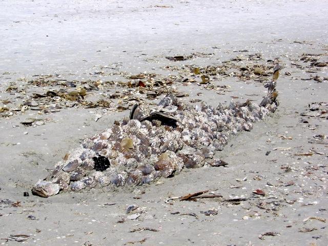 Shell Fish Art