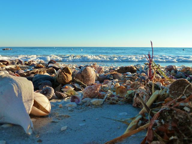 Beached Seashells, Starfish and Crabs