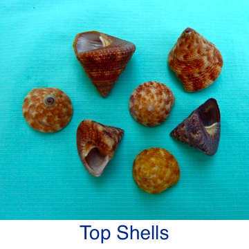 Top Shell ID