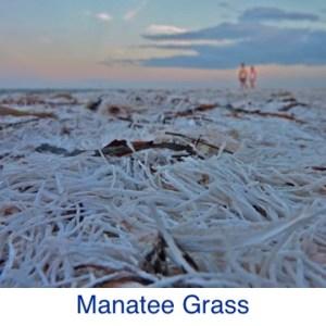 Manatee Grass Beach ID