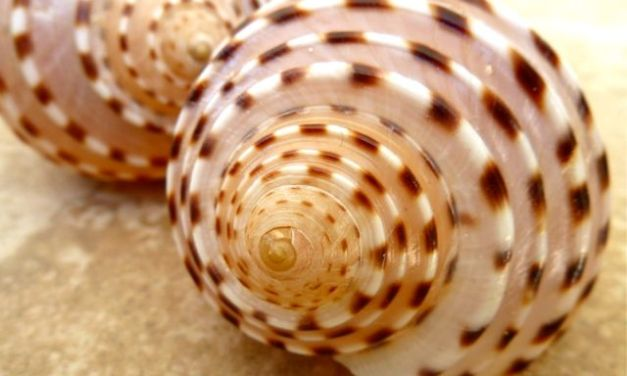 Our Adventures Of Collecting Seashells In Thailand – Part 3