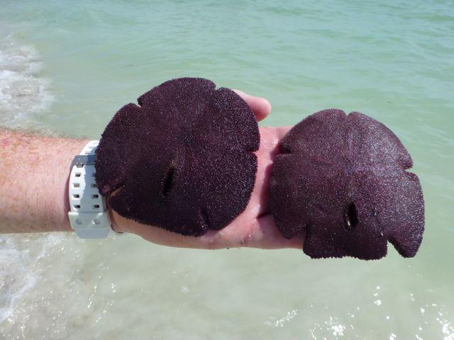 Snorkeling Sanibel's Out Islands