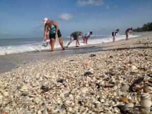 Hurricane Isaac starts producing shells on Sanibel !