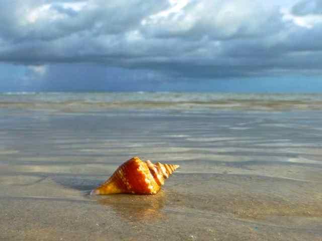 conch shell portait