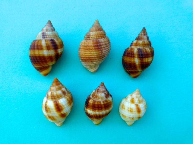 Pam and the Amazing Technicolor Dream Shells