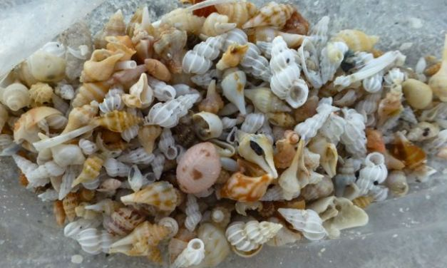 Getting Carried Away With Seashells