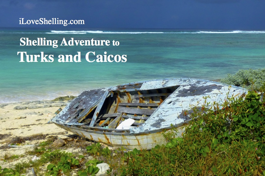 iLS shelling adventure caicos
