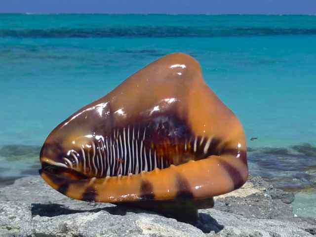 Finding Seashells On Turks And Caicos Islands