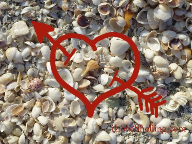 i Heart Shelling in February