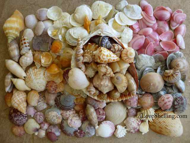 Stopping For Seashells- A Marco Island Day Trip