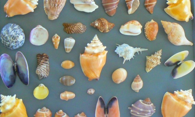 Weekend Away To The Caribbean To Hunt For Seashells