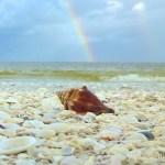conch double rainbow sanibel island florida