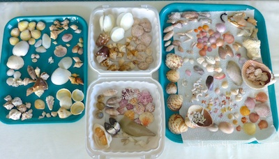 Seashells and Beach Bling at Shellabaloo 3 Shell 'N Tell