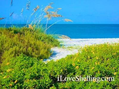Peace, Beach and Seashells
