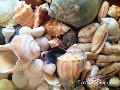 moms shells virginia north carolina