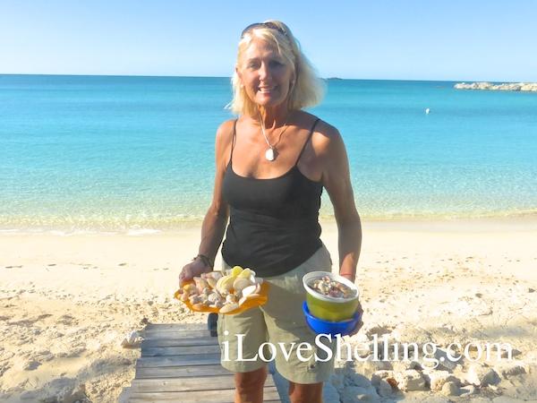 Jane shells from Cat Island Bahamas