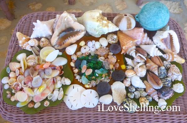 caribbean beach sea glass shells buoy sand dollars