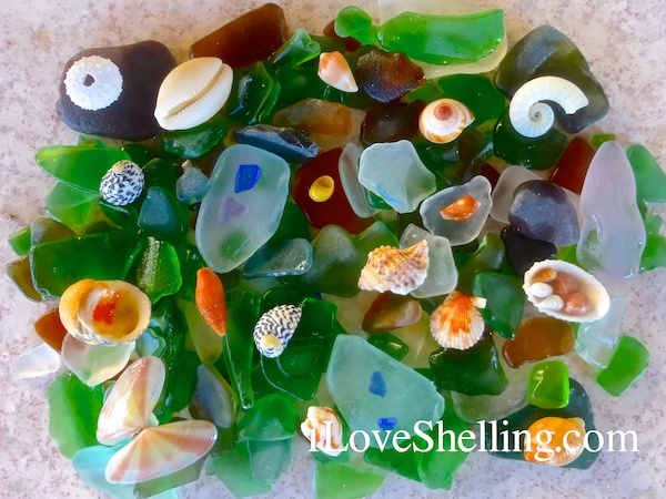 cat island sea glass seashells shelling