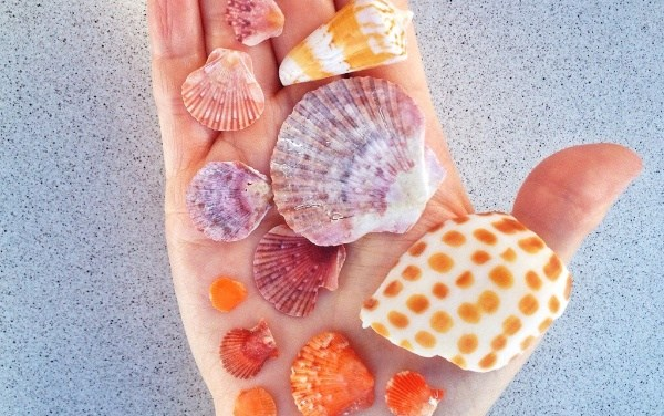 Sanibel Shell 'N Tell Rocks!