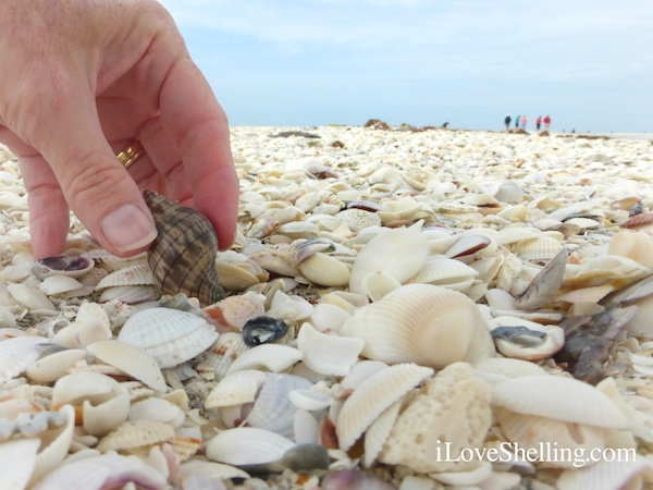 Sorting and Shelling For Seashell Art Project