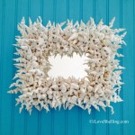 Whimsical World Of Worm Shells