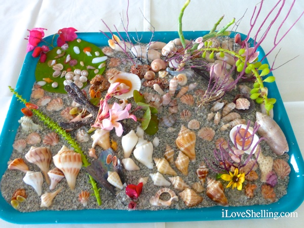 Shellabaloo Shellartist Gallery of Shell Collections
