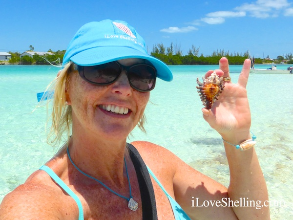 pam found a west indian lace murex in bahamas