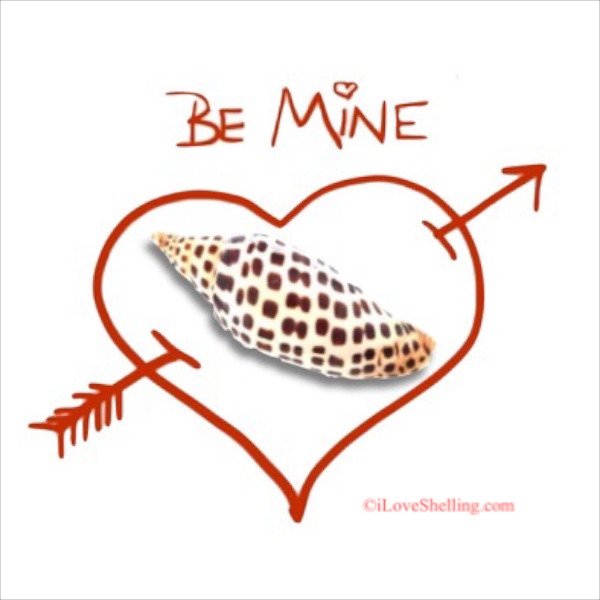 Be Mine, Junonia Shellentine