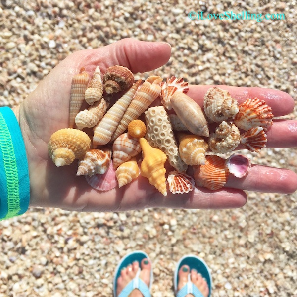 Seashells with aqua flip flop toes on the beach