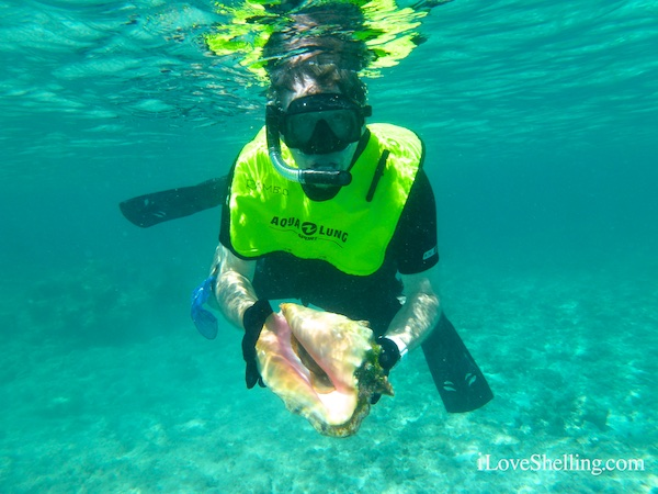 sea shell snorkeling BVIs British Virgin Islands