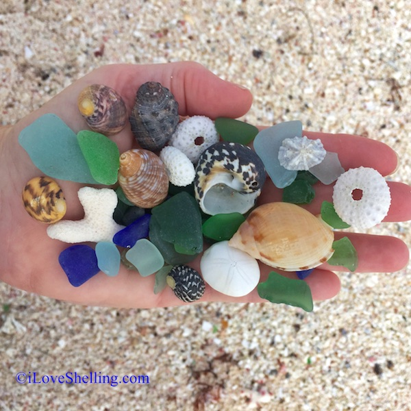 seashells and sea glass Anegada BVIs