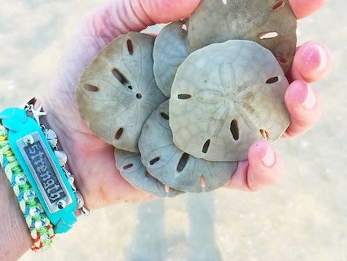 Sanibel Treasures Revealed at Low Tide