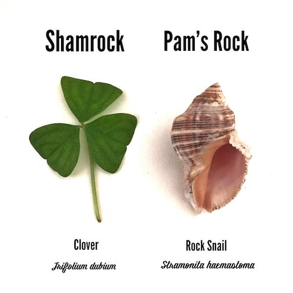 Happy ShellPatrick's Day!